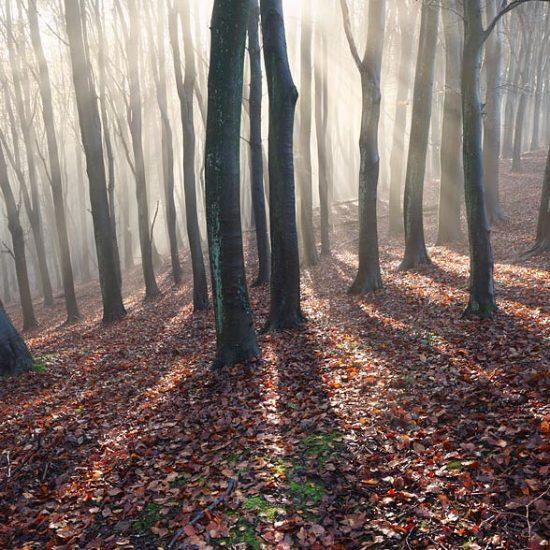 Prior's Wood